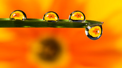 Droplet (Explored )