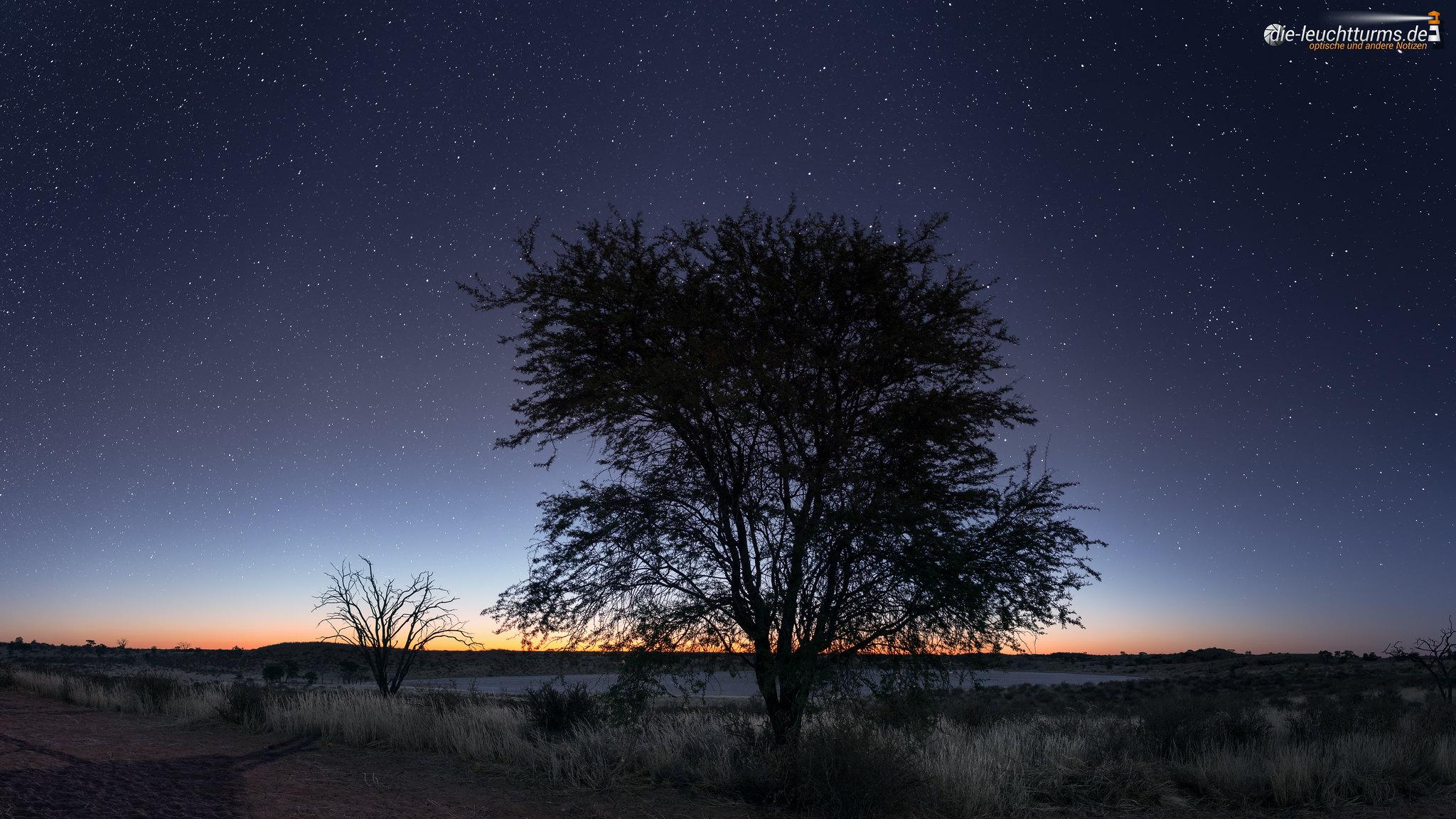 Bitterpan under stars