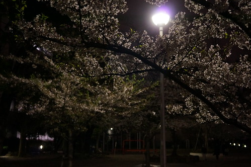ray sakura normal