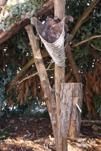 canada-maple-sugar-bush