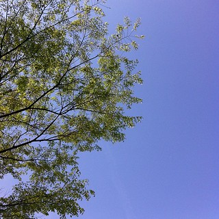 快晴。 #sky 青い葉を見ると、ああ春だなあと思う