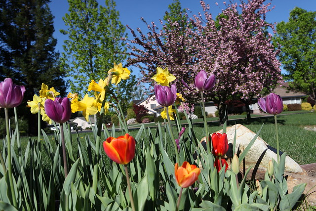 spring flower_061