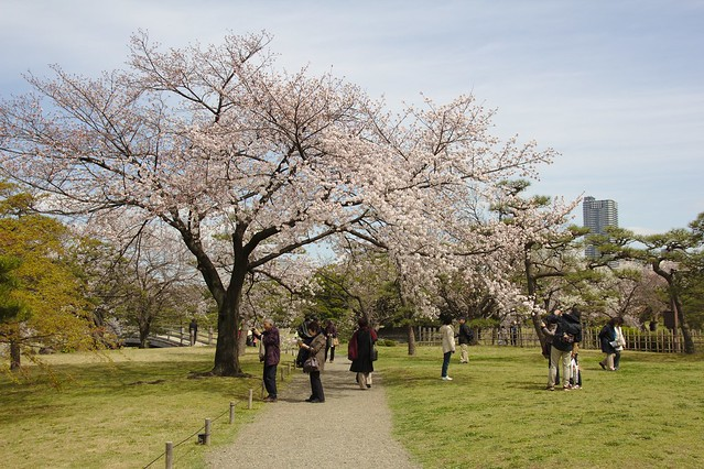 0292 - Hamarikyu Gardens