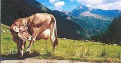 Švýcarsko v obrazech a ve fotografii