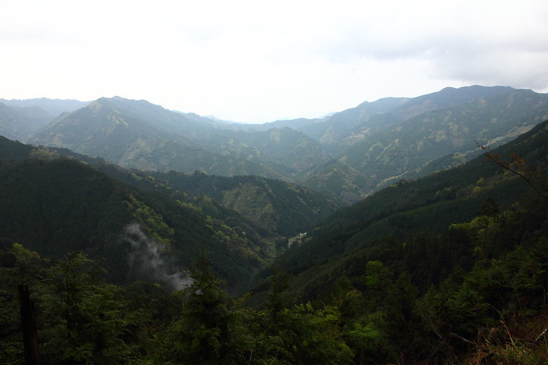 IMG_6994_4-24 Tsubayama Wandering