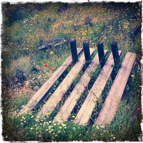 Por la vía verde de la Jara ...;-)