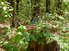 Patriotic tree stump