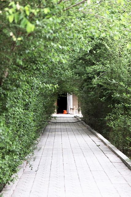 Green tunnel in Tomb of Gaisi , Kumul (Hami) ハミ、ケイス廟敷地内の緑のトンネル