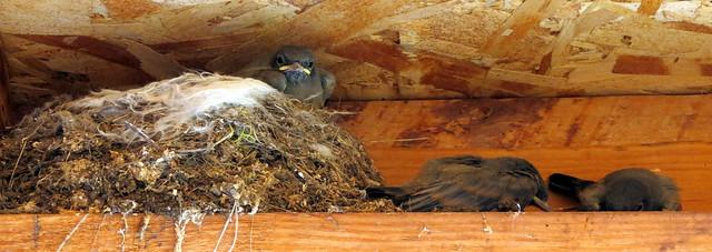 CC Birds Nests 2