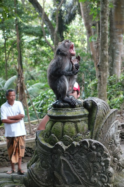 Opera Monkey