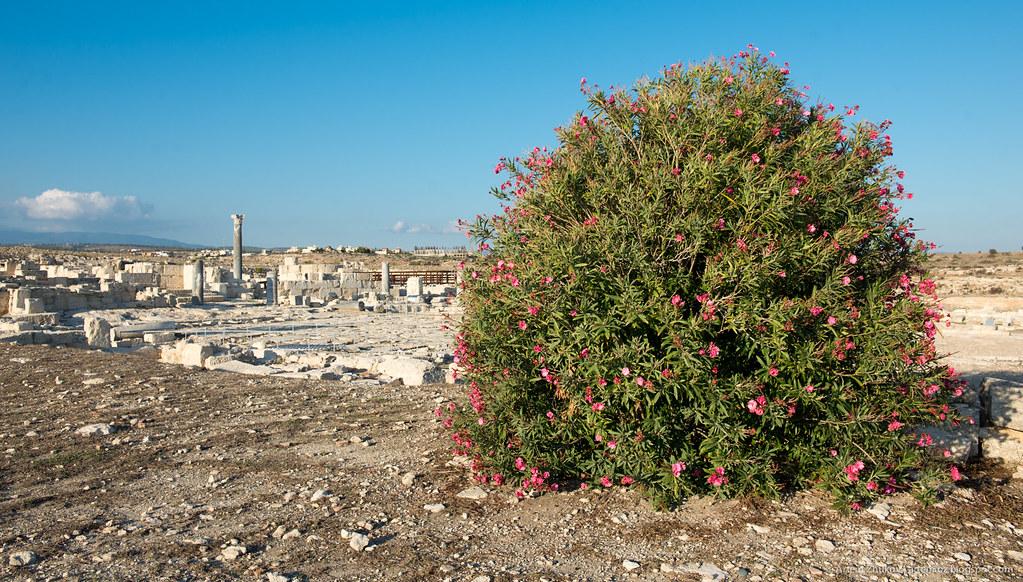 Kourion (Curium)-9.jpg