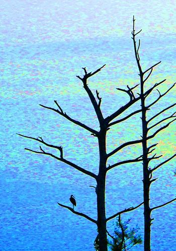 morning blue sun tree sunrise florida ibis palmbeachcounty sandhillcraneaccesspark