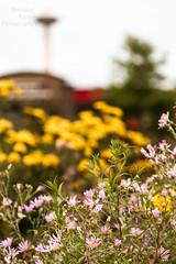 South Lake Union wildflowers