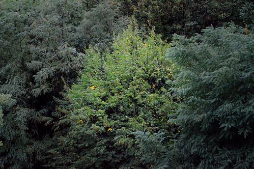 Shades of green in September - Lagonegro