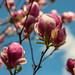 Spring has arrived! by SteveA07