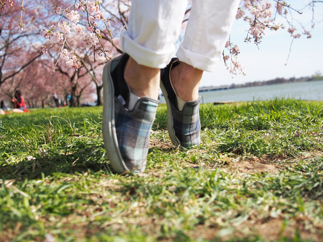 my fair vanity, rachel mlinarchik, cherry blossoms, plaid, tidal basin, washington dc