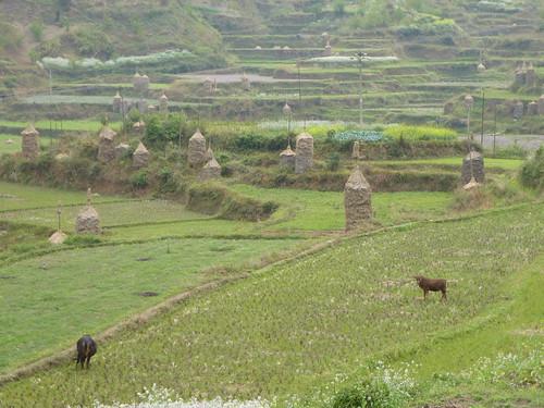 Guizhou13-Kaili-Shiqiao (103)