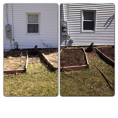 Before & after. I am a lazy gardener, should have done this last fall. Getting the beds ready.