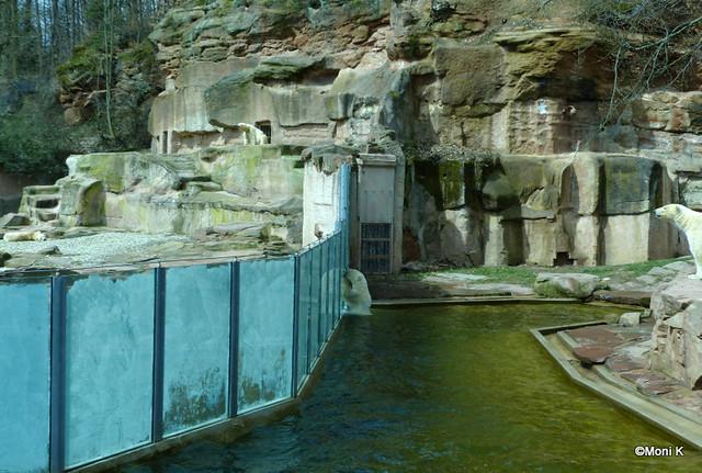 06-Eisbärsuchbild