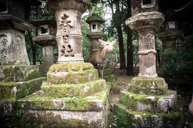 2013.Mar.Nara.奈良.春日大社