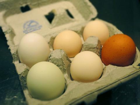 eggs-0413