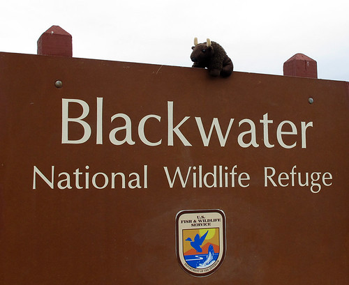 13-04_Blackwater NWR_2M