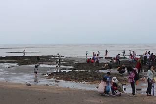 桃園觀新藻礁;攝影:廖靜蕙
