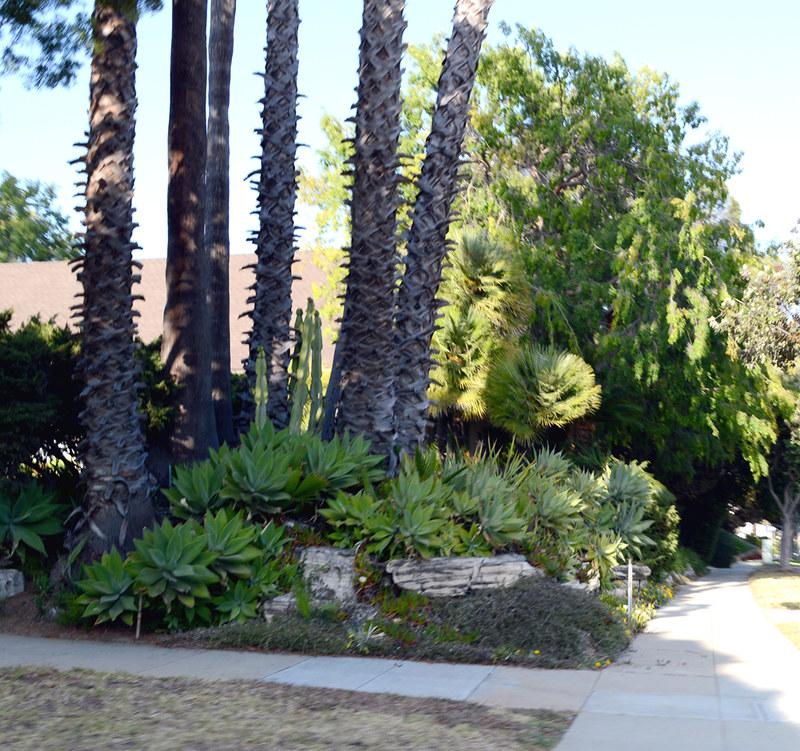 Huge Ornamental Cactus
