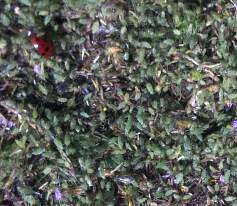 Here's a zoomed in shot of the photo I shared before. Look how many insects are here! These are beneficial insects that live in our 90 acres of pecan orchards now farmed using biological methods. We're happy to have these gazillions of helpful little guys