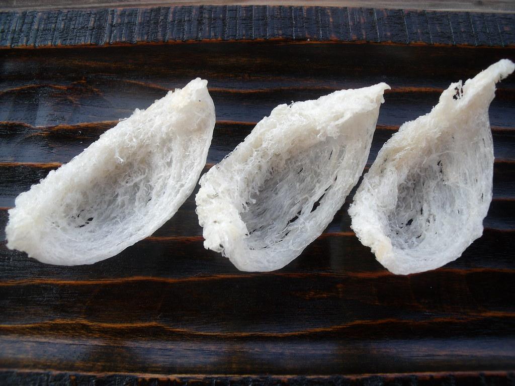 Nidos del vencejo de las cuevas, ingrediente básico para la famosa sopa de nidos de golondrina. Autor, Reforma.Imufomot