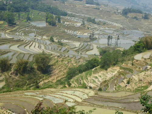 Yunnan13-Yuanyang 12-Malizhai (6)