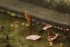 葉上の雨粒
