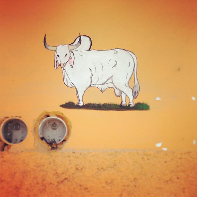 Tulum_Cow