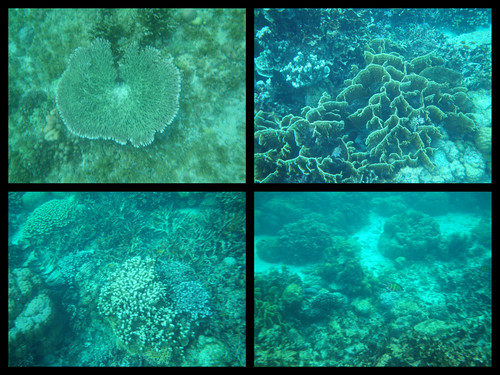 Malapascua Underwater