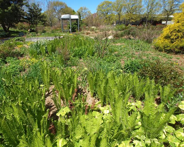 Queens Botanical Garden New York City Flickr Photo