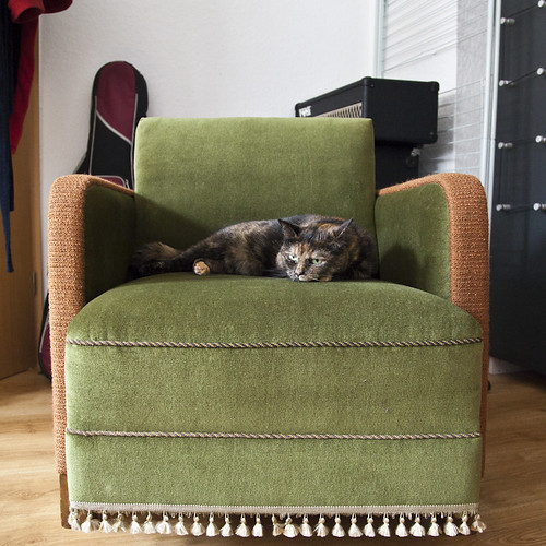 the cat's new armchair