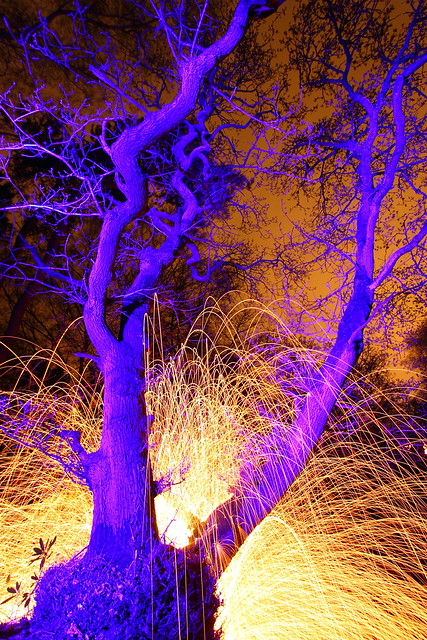 Wacky Weirdo in Wild Woods Whirling Wads of Wire Wool 2