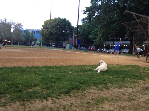 Softball game one