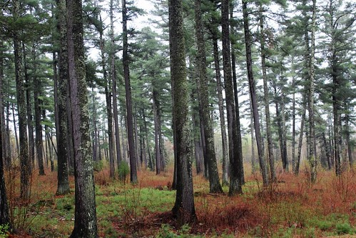 Uhrenholdt Memorial Forest