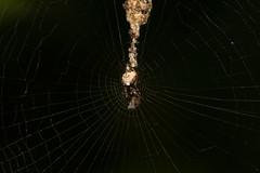 Trashy Web