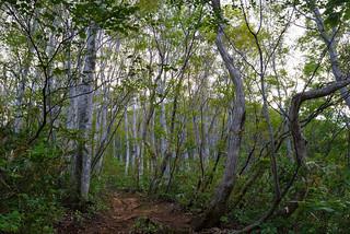 序盤・・・泥んこのブナ林の登山道を行く