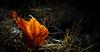 Leaf Afire