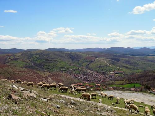 nature landscape war sheep serbia eu osce kosovo violence conflict balkans grazing kfor 2013 janevo eulex veletini
