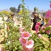 The Hollyhocks' View of Community Gardeners... by Chic Bee