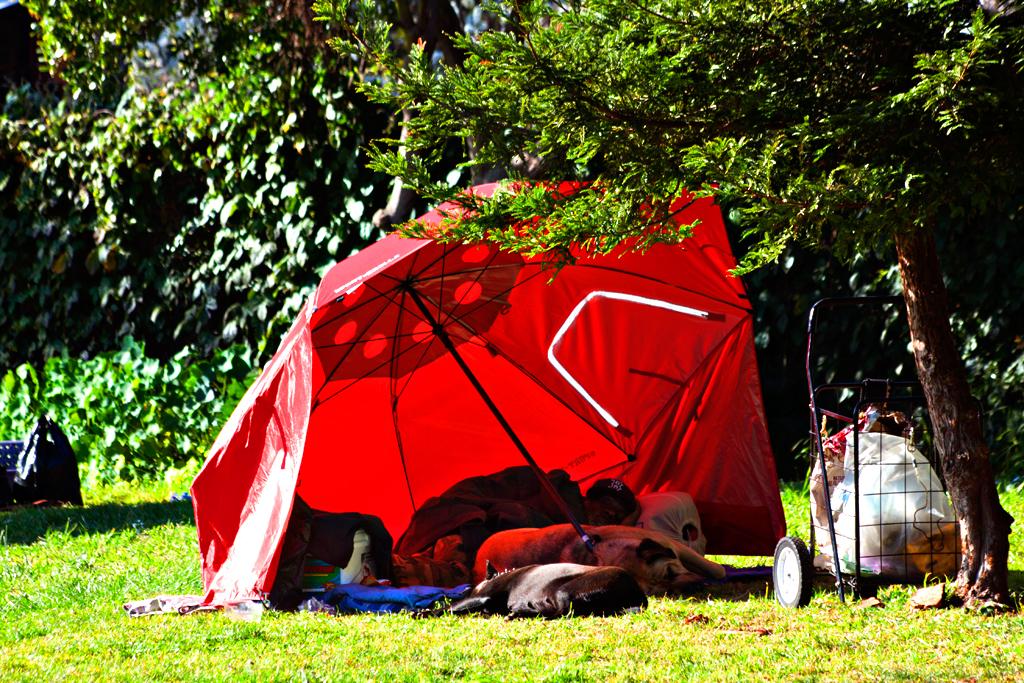 Man-with-two-dogs-sleeping-under-huge-umbrella--Berkeley