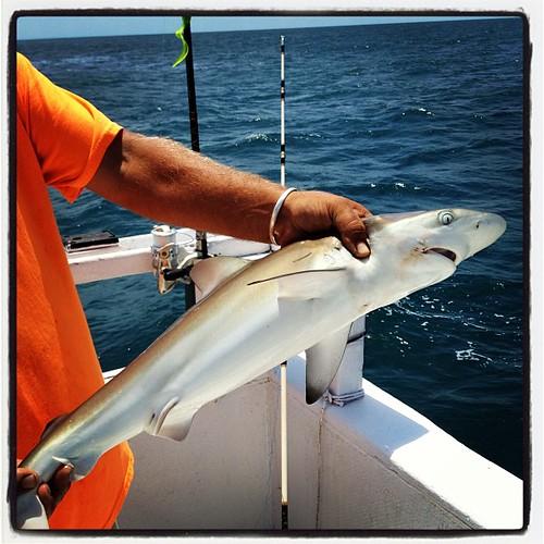 I caught a shark
