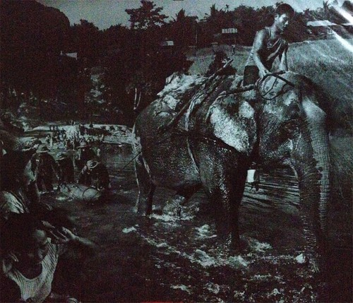 photo of a photo in the MAG office. elephant dragging a bomb out of the water