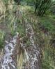 Water Flowing in Granite Creek 1