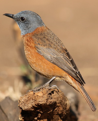 Gauteng South Africa