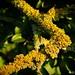 Baumflechte / Tree Lichen